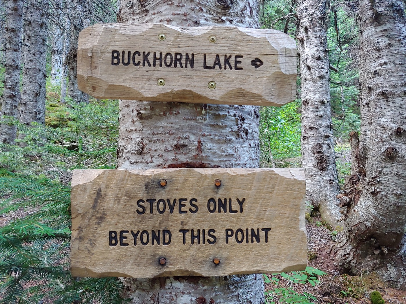 A trailside sign informs backpackers that campfires are not allowed beyond this point on Tubal Cain Trail in Olympic National Forest, but that camp stoves are allowed.