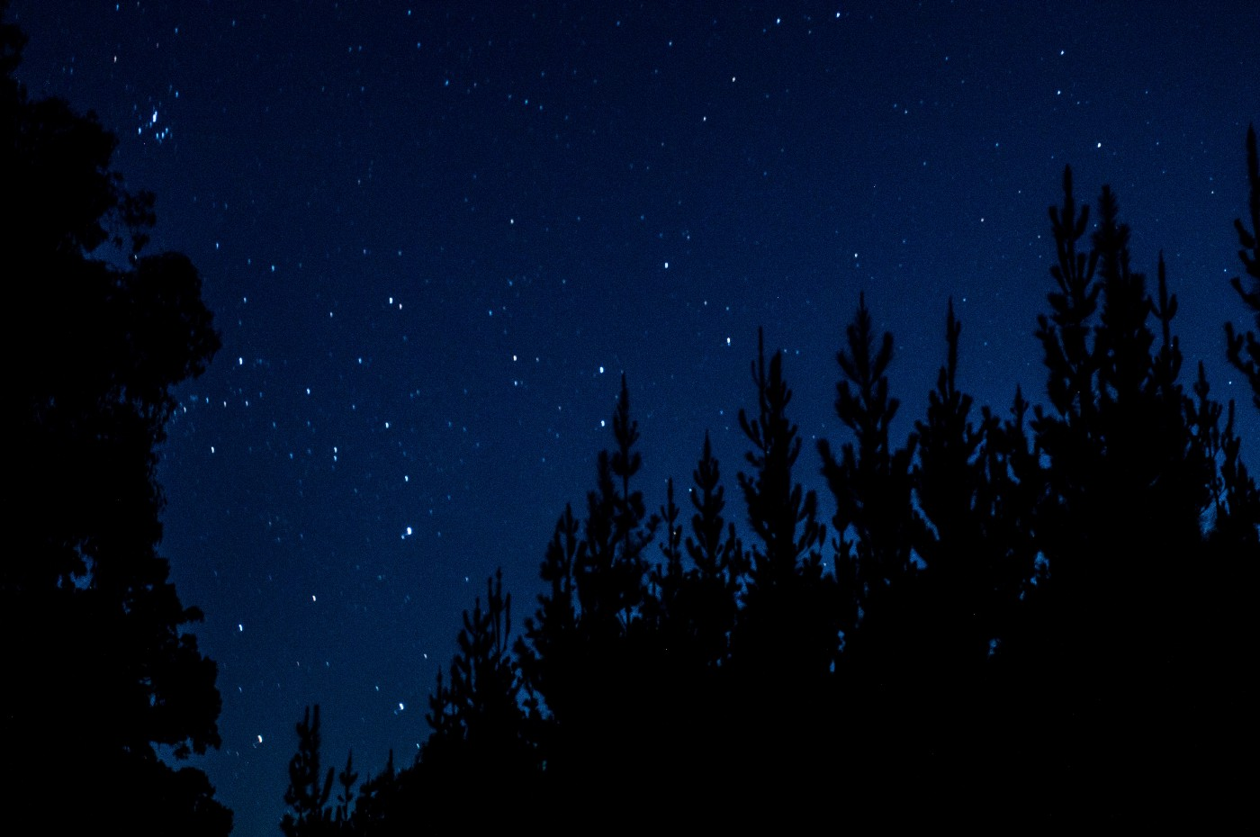 A darkened tree line with bright shining stars in the sky at night.