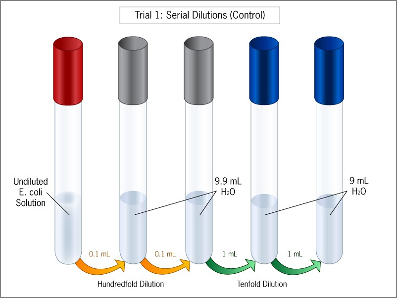 A diagram showing a series of 6 test tubes. We pipetted solution between test tubes and added water to dilute further.