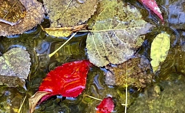 Multi-colored autumn leaves sit in a thin pile on wet ground.