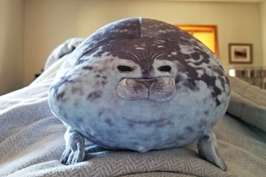 The seal pillow on the author's bed.