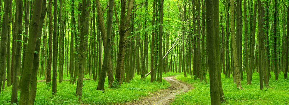 The path unfolds through the forest of life.