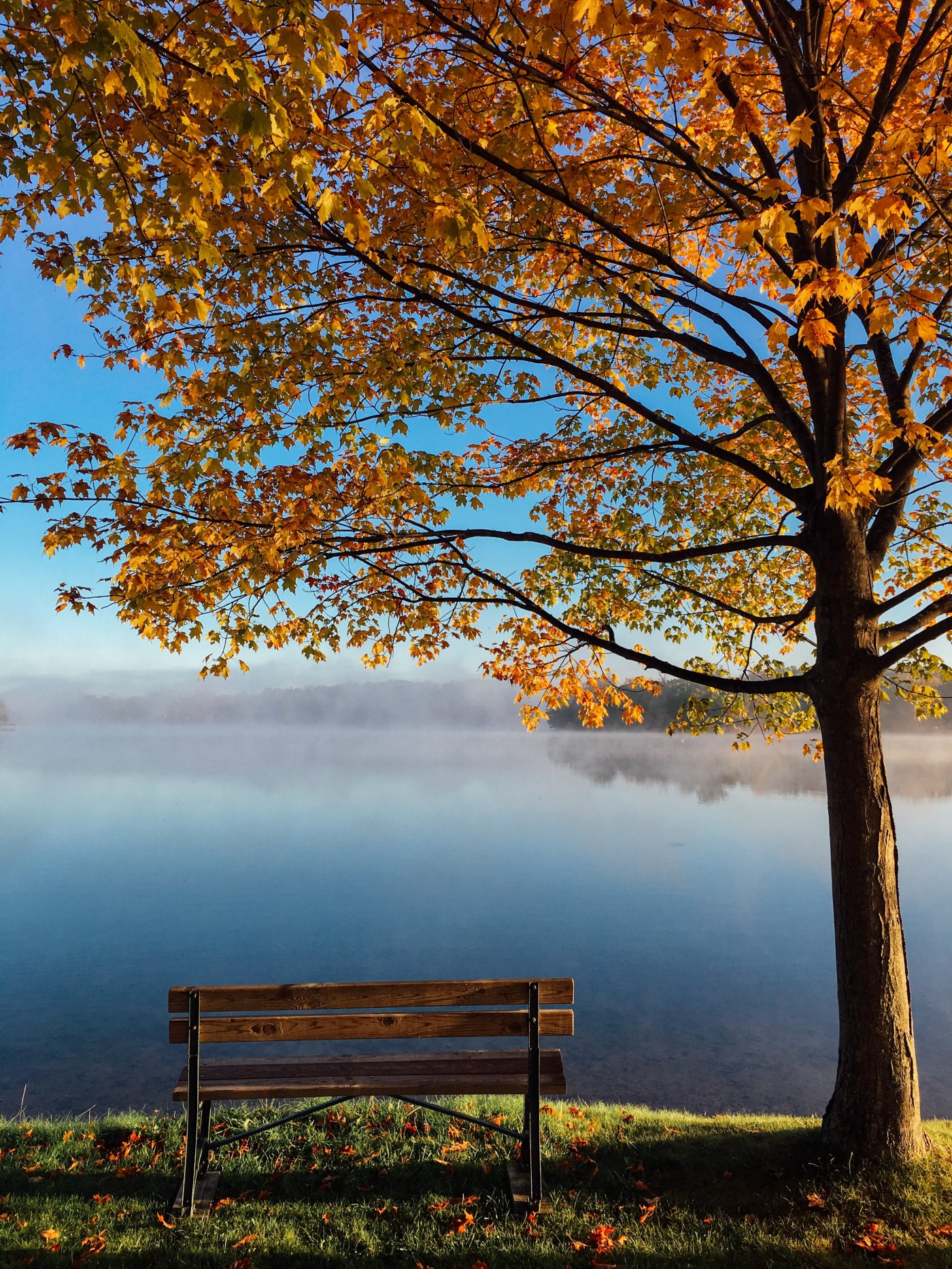 A park bench sitting under a tree with colored trees indicating it's fall. There is fog hovering over a body of water in front of the bench and tree.