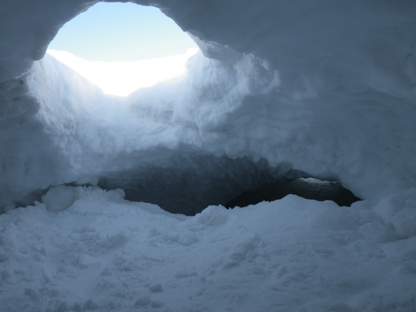 View from inside a den, showing a cave of snow and a hole to the outside.