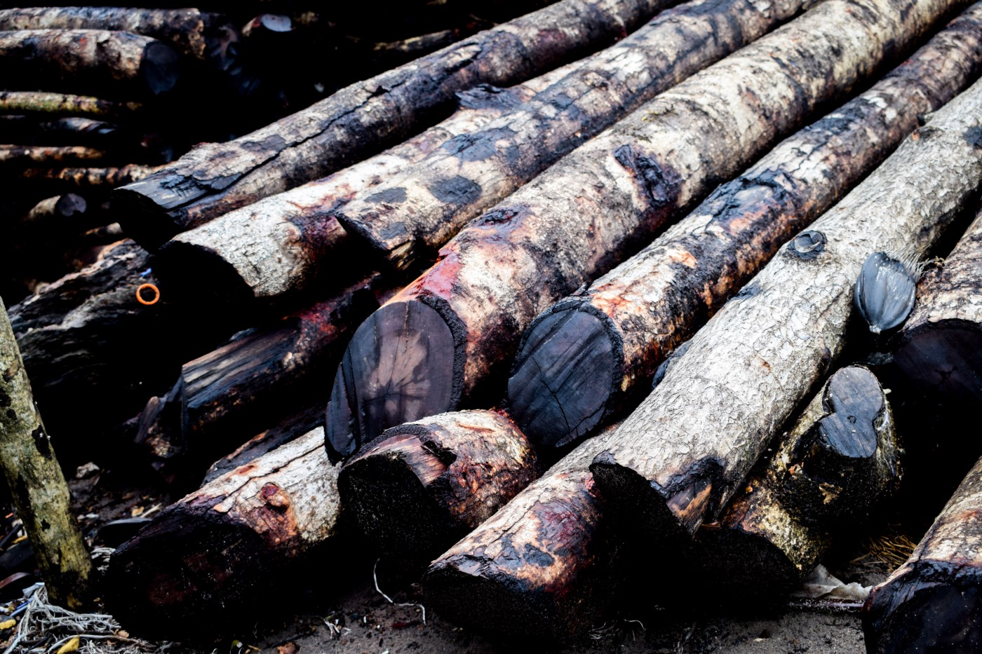 A close-up photograph of a stacked pile of 10 to 15 logs, showing their cut ends.
