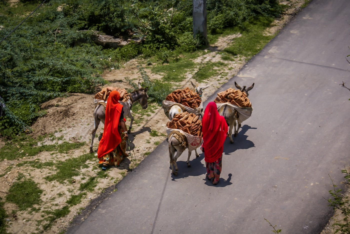 Female labourers from Udaipur, India, walking their donkeys and bricks to site.