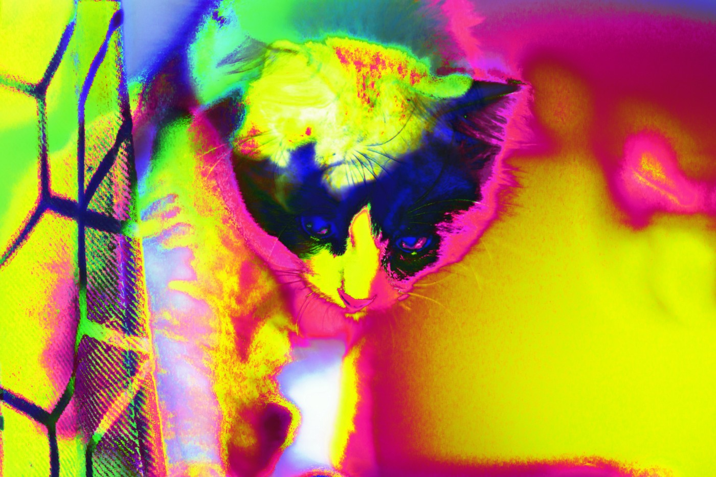 Kitten pop art, vibrant colors.