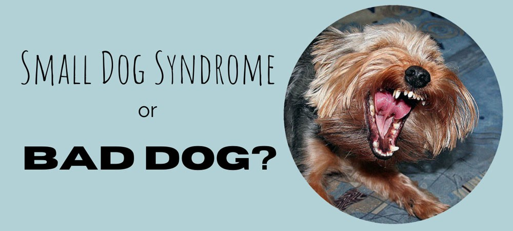 Snarling dog and message Small dog syndrome or bad dog?