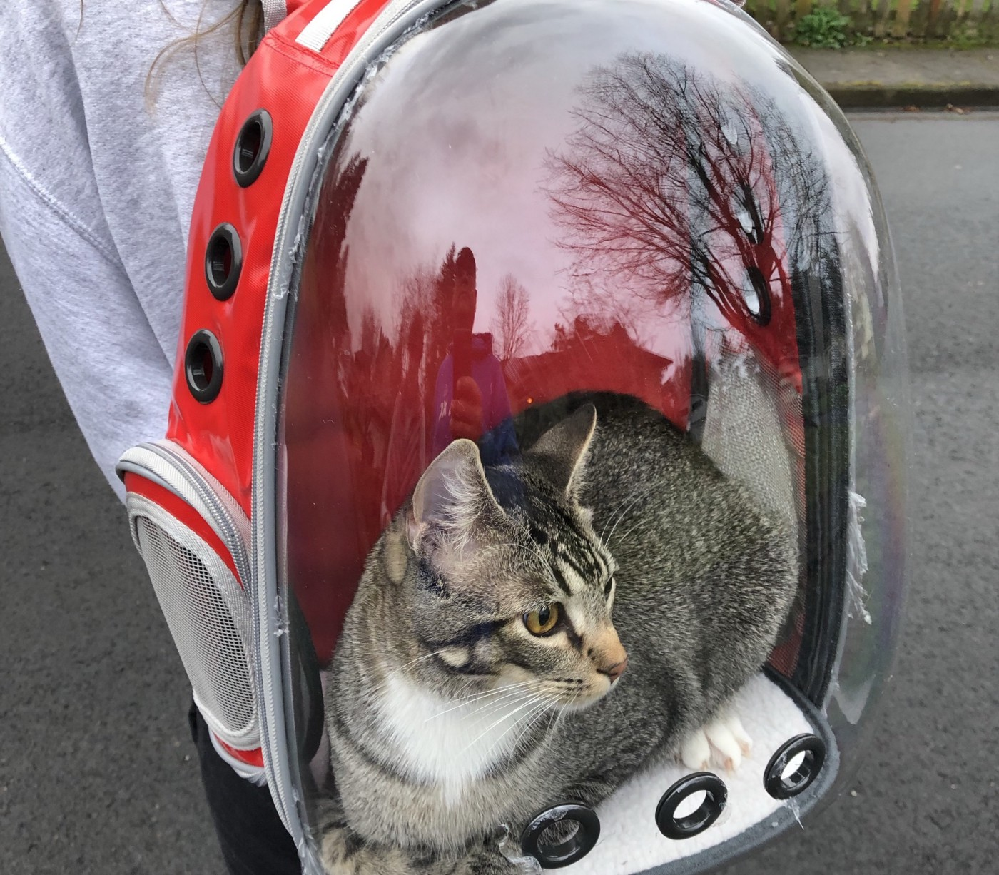 Murray the cat sitting inside a backpack with a clear plastic dome (and airholes) allowing it to look at his surroundings.