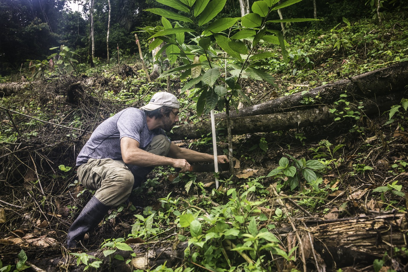 What's Wrong With Cacao Farming? - Jerry Toth - Medium