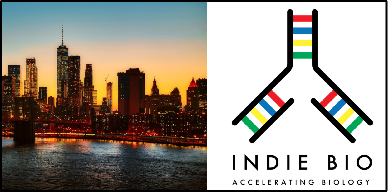 Skyline of New York City at Sunset next to the IndieBio logo