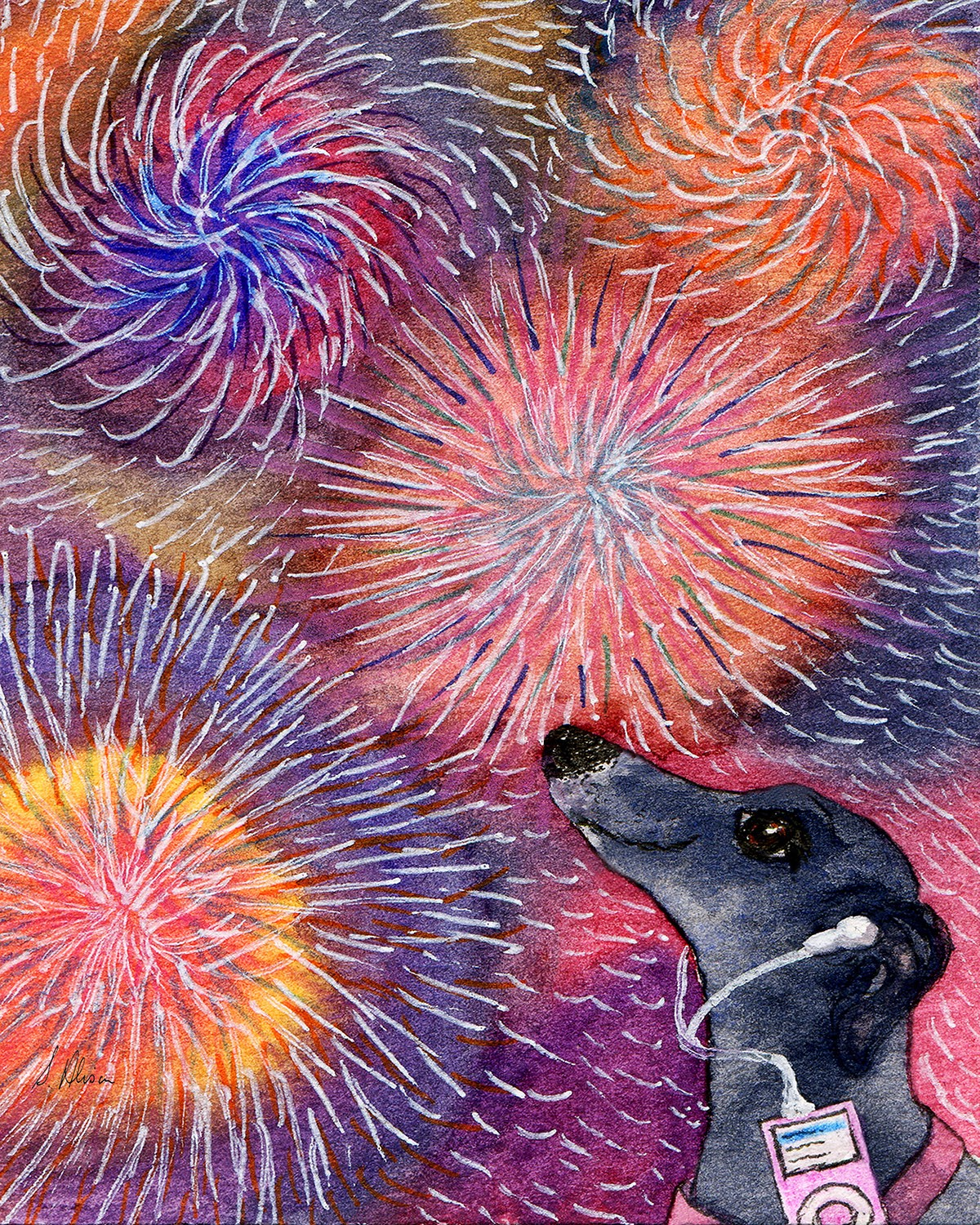 A dog listens to an ipod to block out the sound of fireworks