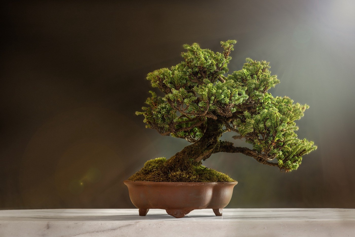 Image of a Bonsai tree on a table