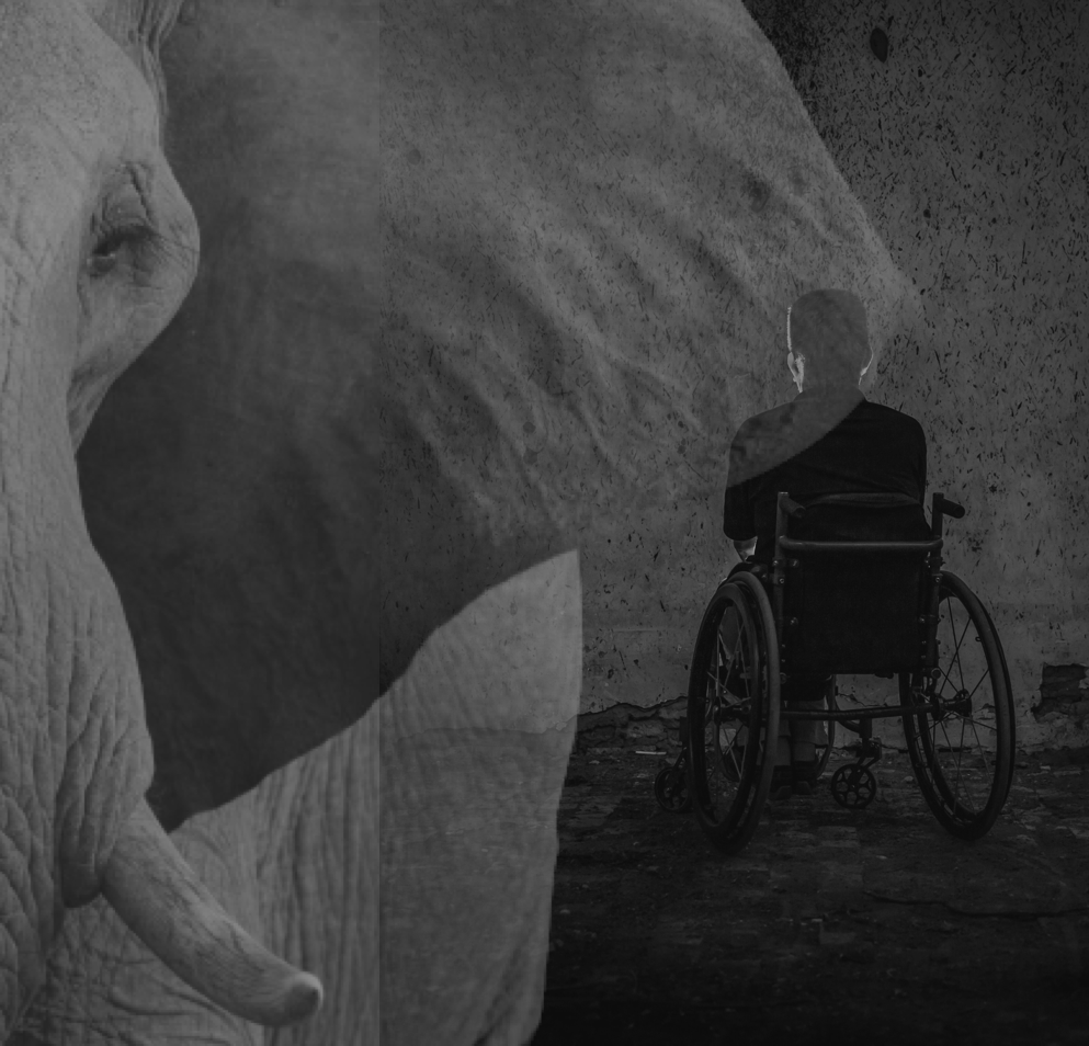 Elephant in the foreground with a man in a wheelchair in the background sitting in shadows.