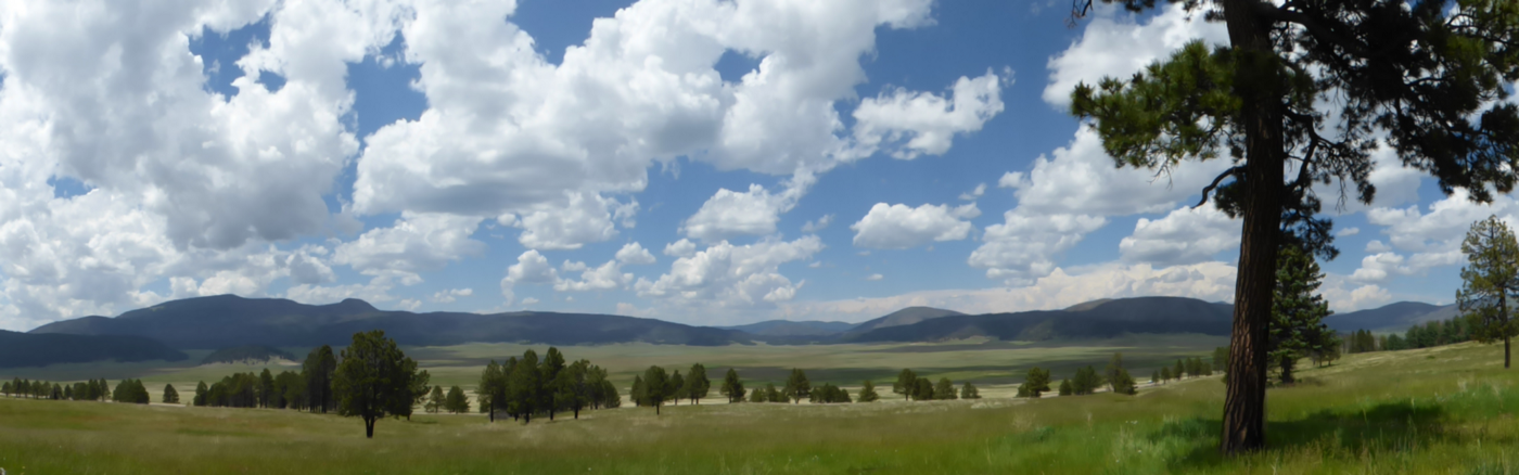 Panorama of summer scene with rolling green land below and fluffy white clouds sailing in a blue sky. Pine trees at the right edge.