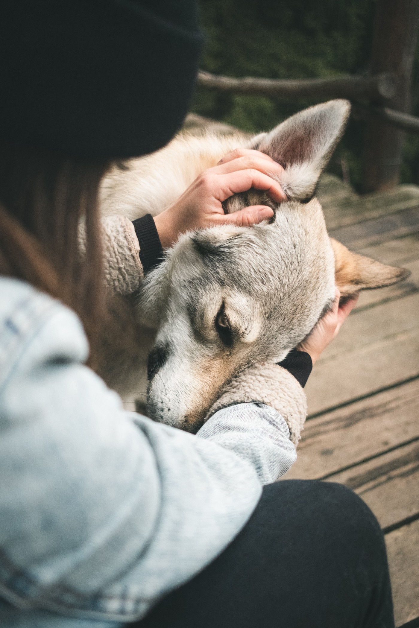 Close up of woman caressing wolf's head