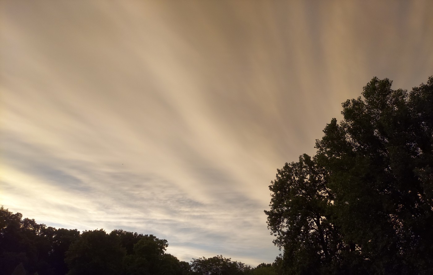 Cloudy sky behind trees. The clouds appear to be streaming from a point to the left of the image