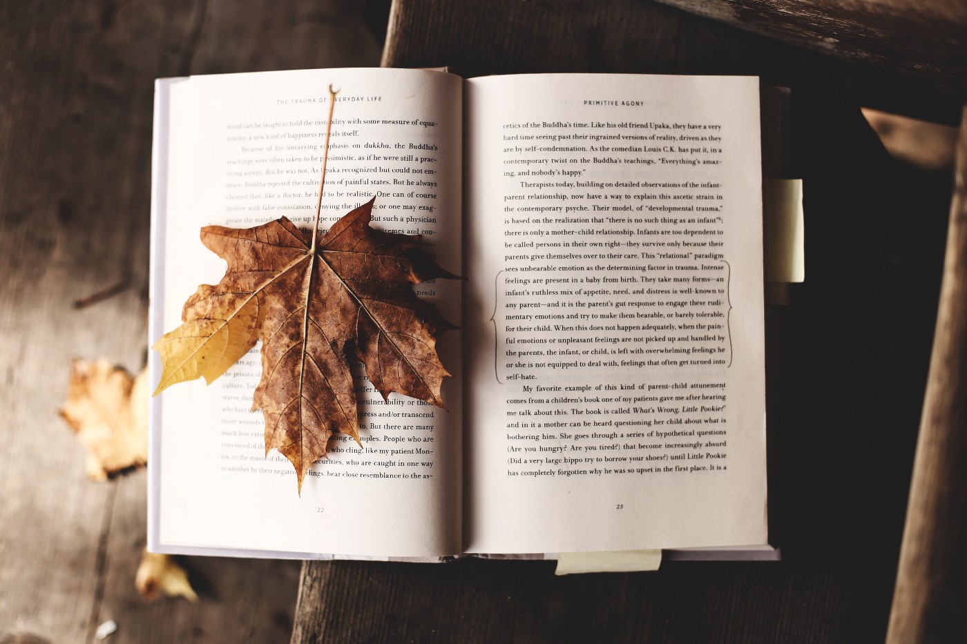 Photo of an open book with an autumnal leaf laying on one of the pages.