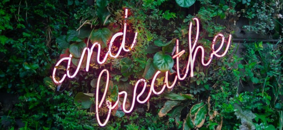 """Image of the words """"and breathe"""" on a wall of shrubbery"""