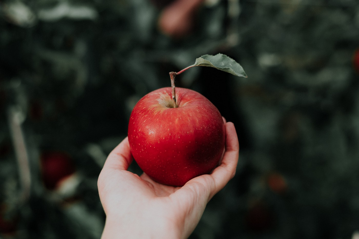 A crisp, red apple in the palm of a hand against a dark background.