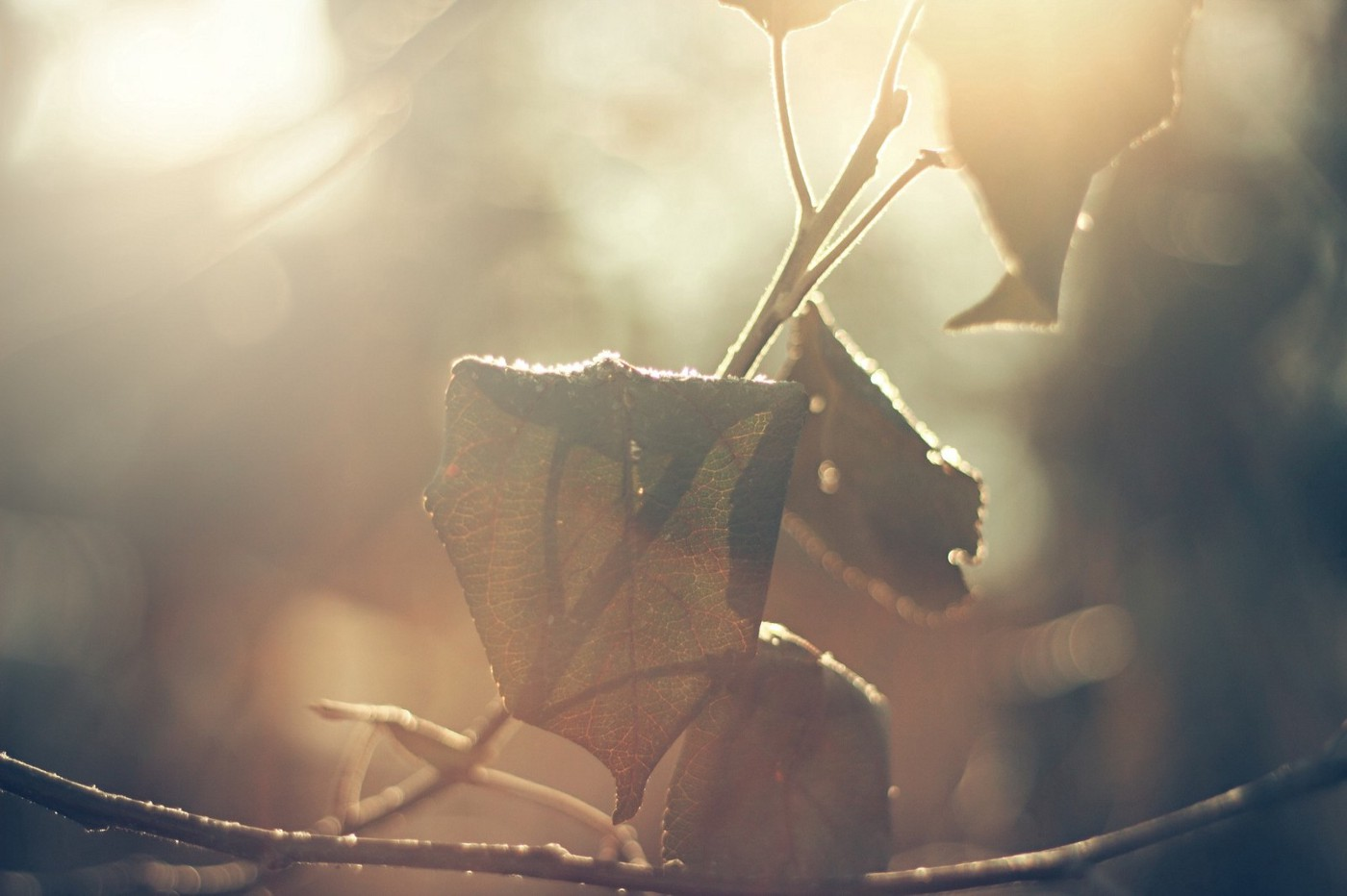 aesthetic brown leaves under the halo of the sunlight