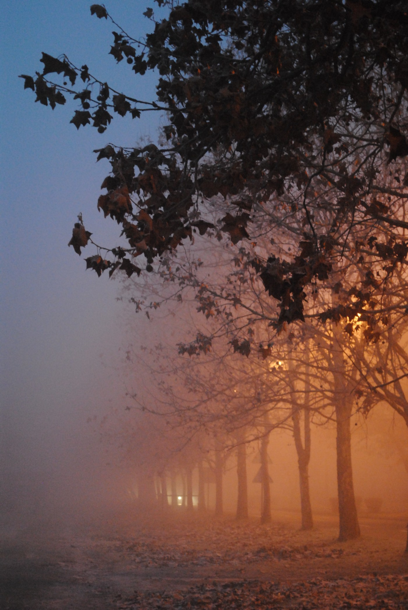 Street with trees and mist.