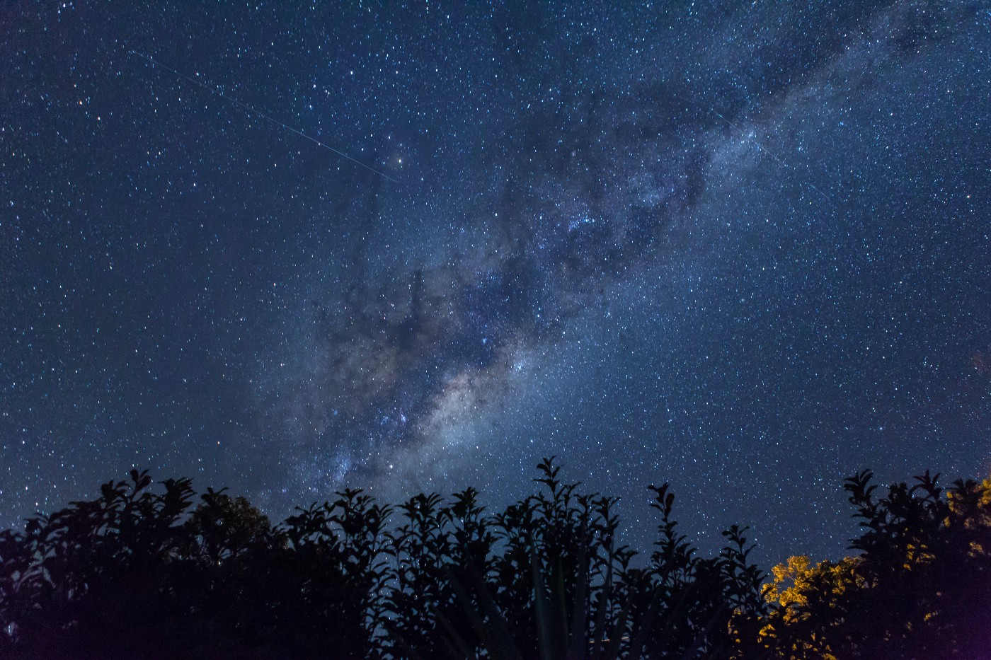 starry night sky above a row of evergreen trees