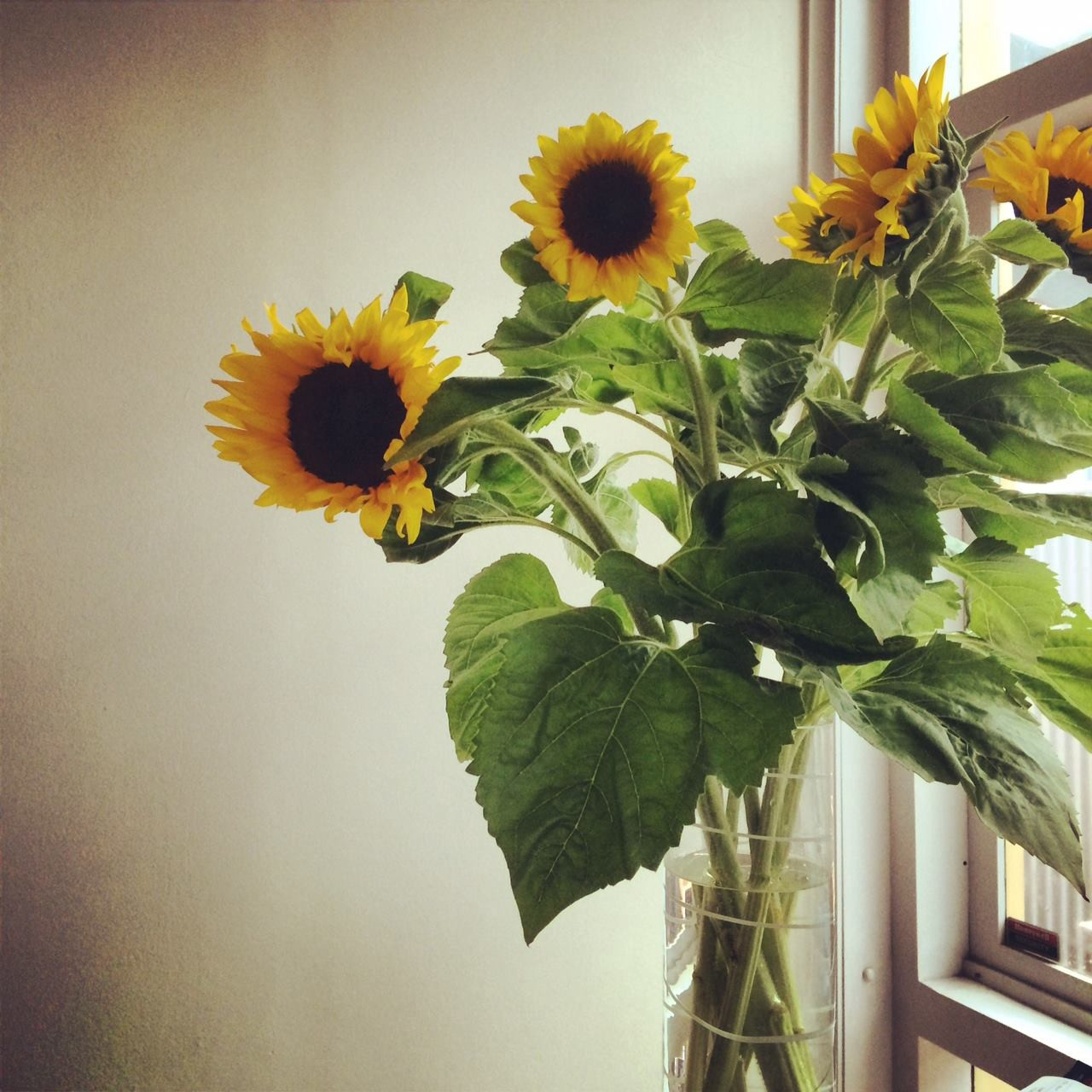 A vase of sunflowers in the afternoon light