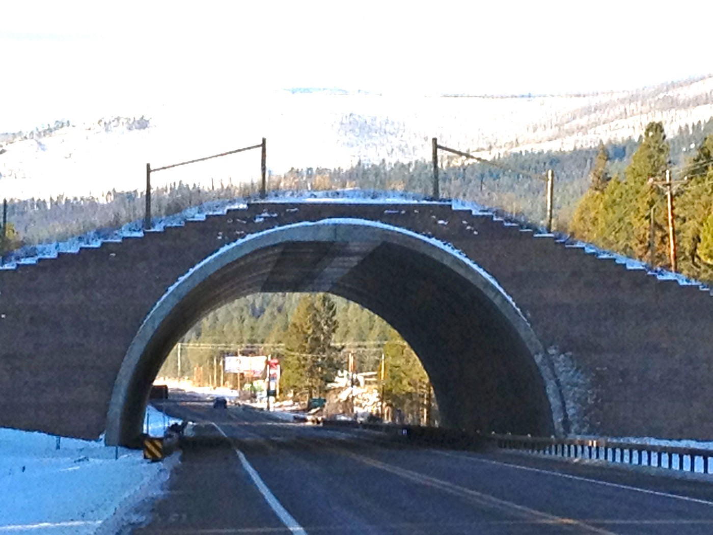 Wildlife Crossings Are Win Win  The question is When When?