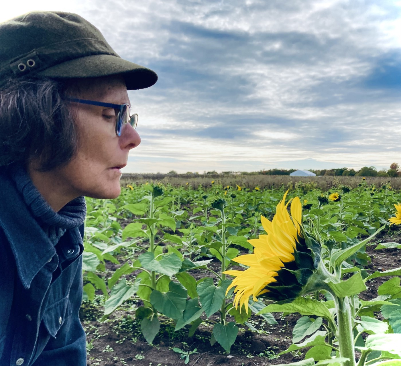 Woman with listening to a sunflower in the field
