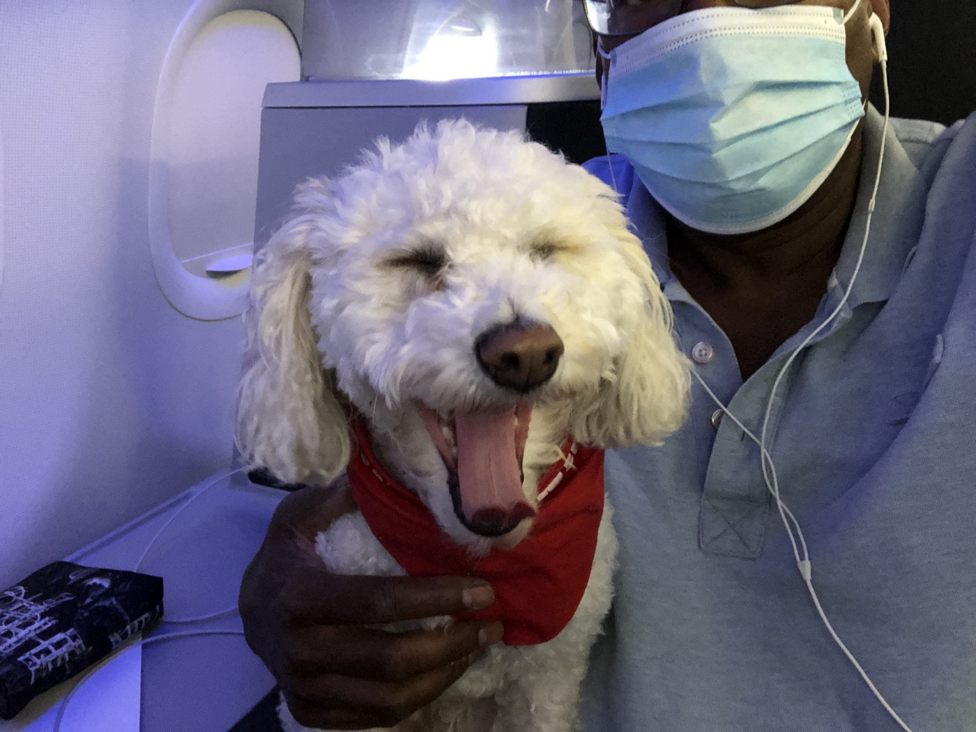 A travel companion who is very happy that the author is taking appropriate travel precautions. Photo by Todd Curtis