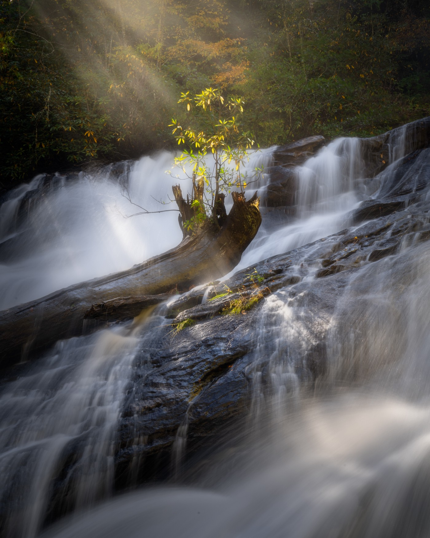 Light rays on a small tree in the middle of a waterfall.
