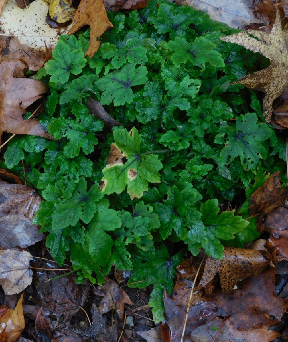 rough-edged, brightly hued green leafed plant fully bloomed on ground
