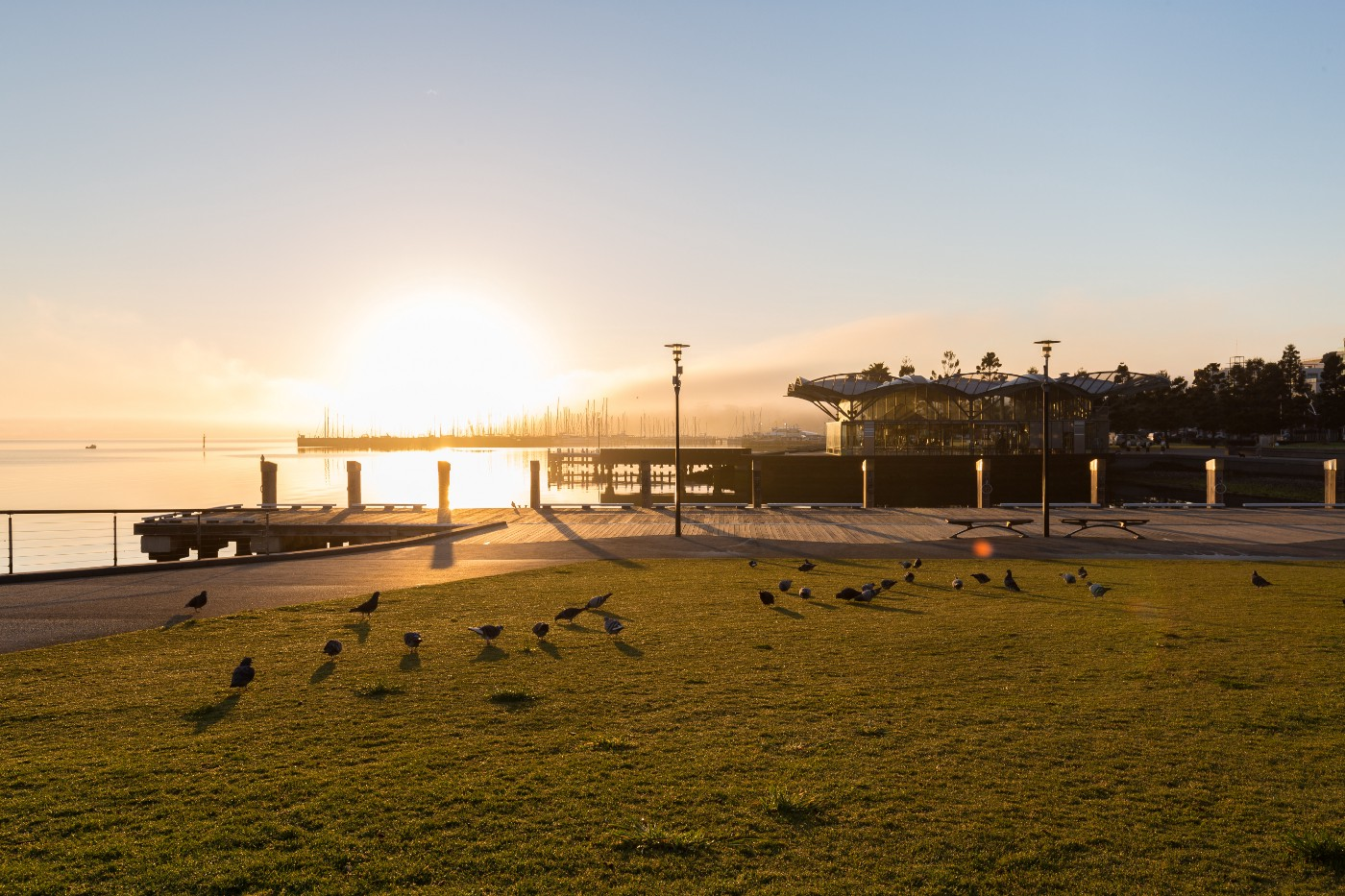 a grassy field with birds on the edge of a body of water with a pier jutting into the water. It is sunset or sunrise