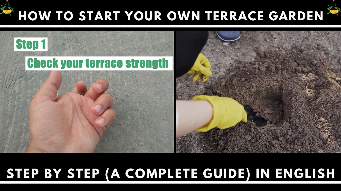How to start your own terrace garden step by step (a complete guide)