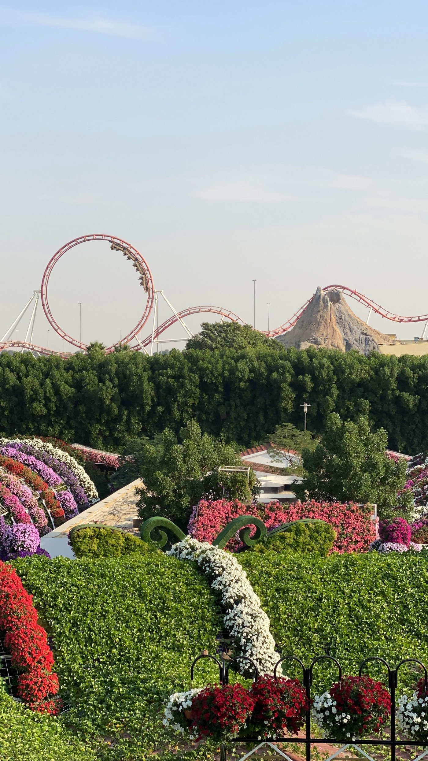 A roller coaster is the backdrop of an amusement park.