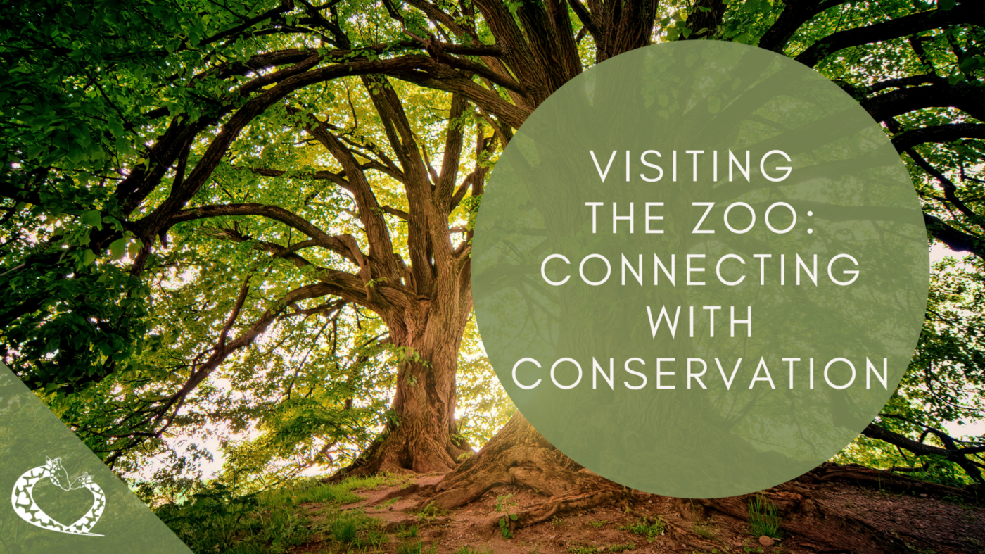 Visiting the Zoo: Connecting with Conservation