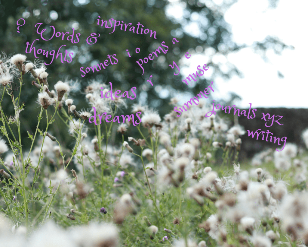 Wild flowers in fluffy seed, in a meadow, with random words floating above
