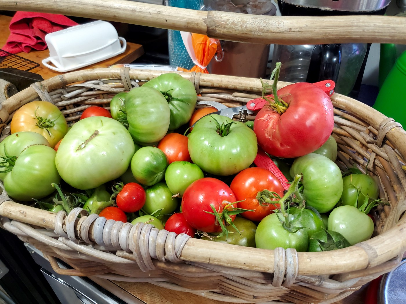 Wicker basker with a handle filled with several varieties of tomatoes in various stages of ripeness.