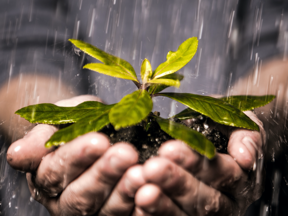 Hands holding a plant seedling in the rain