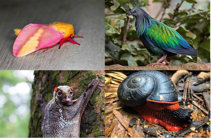 Four unique animals on a grid—a pink and orange moth, a brightly colored bird, a red and black snail, and a strange bat