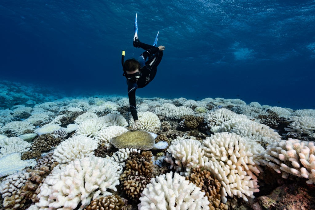 A diver looks at reef of a major bleaching on the coral reefs of the Society Islands on May 9, 2019 in the Polynesian Islands