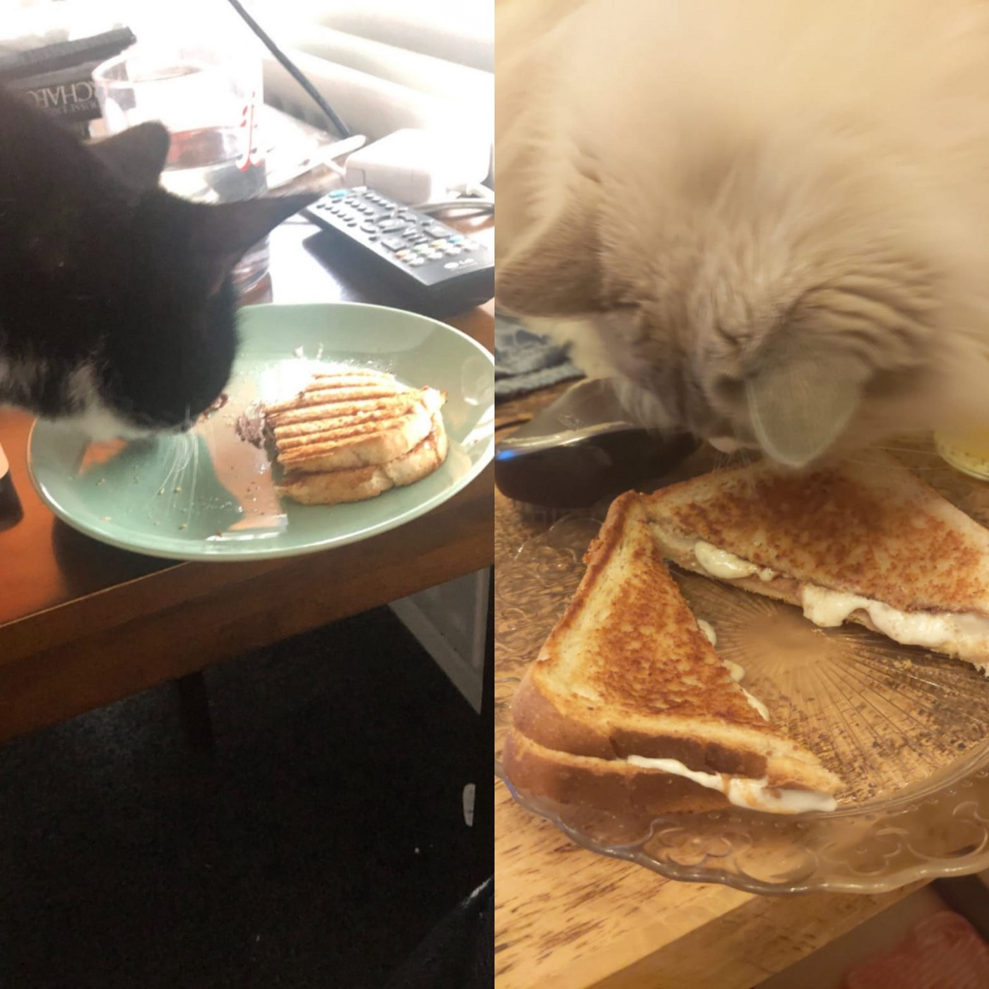 Two images side by side. Each image shows a cat smelling a toasted sandwich with a filling of marshmallow and chocolate.