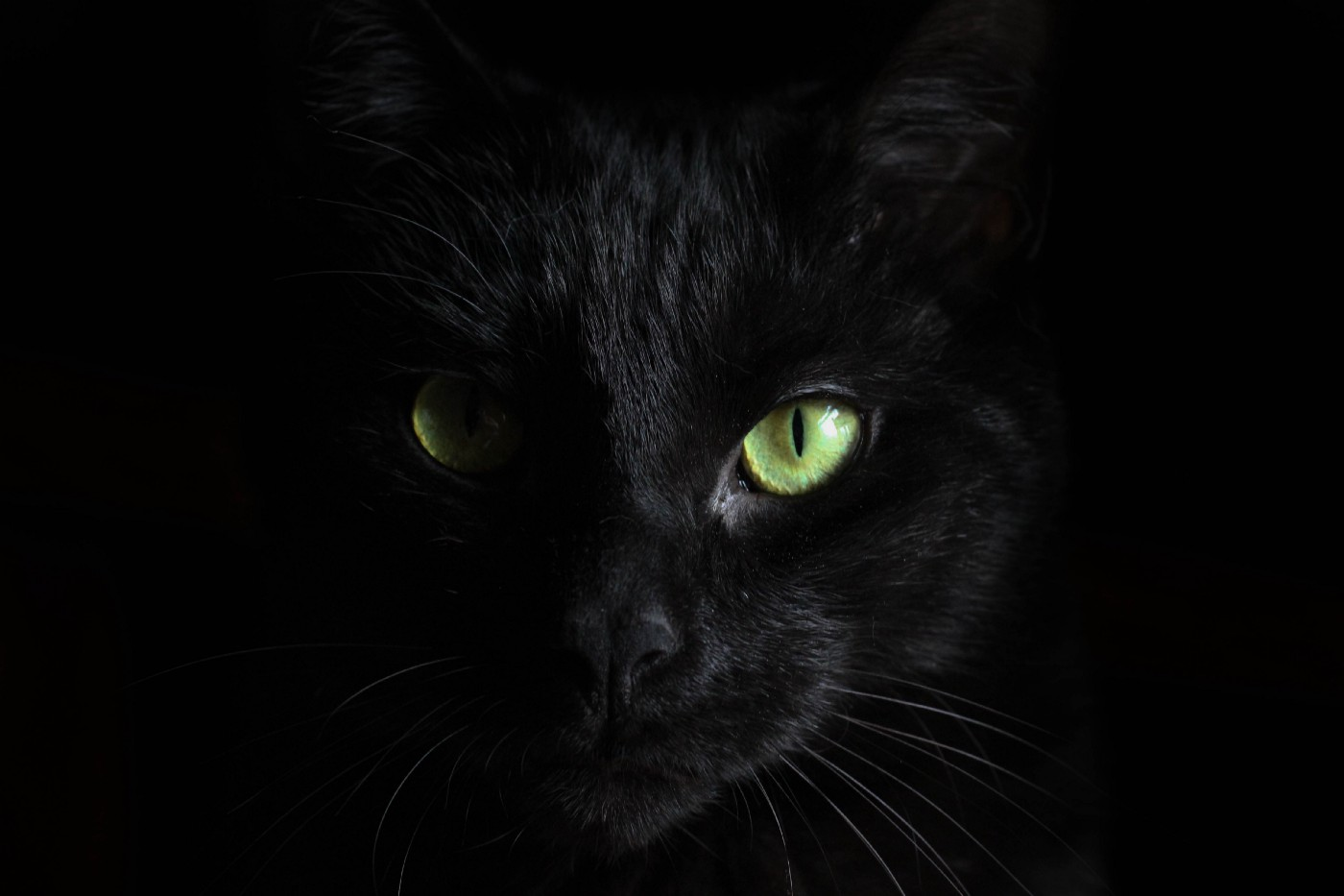 Face of a black cat