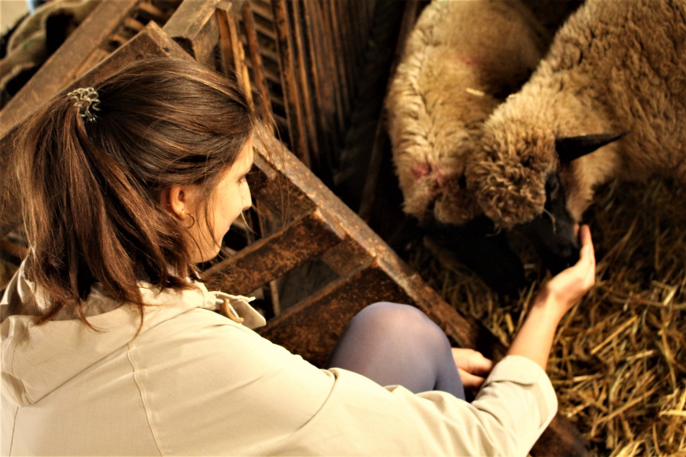 Photo of the author, a woman with brown hair, with an outstretched hand nuzzled by two sheep with black faces