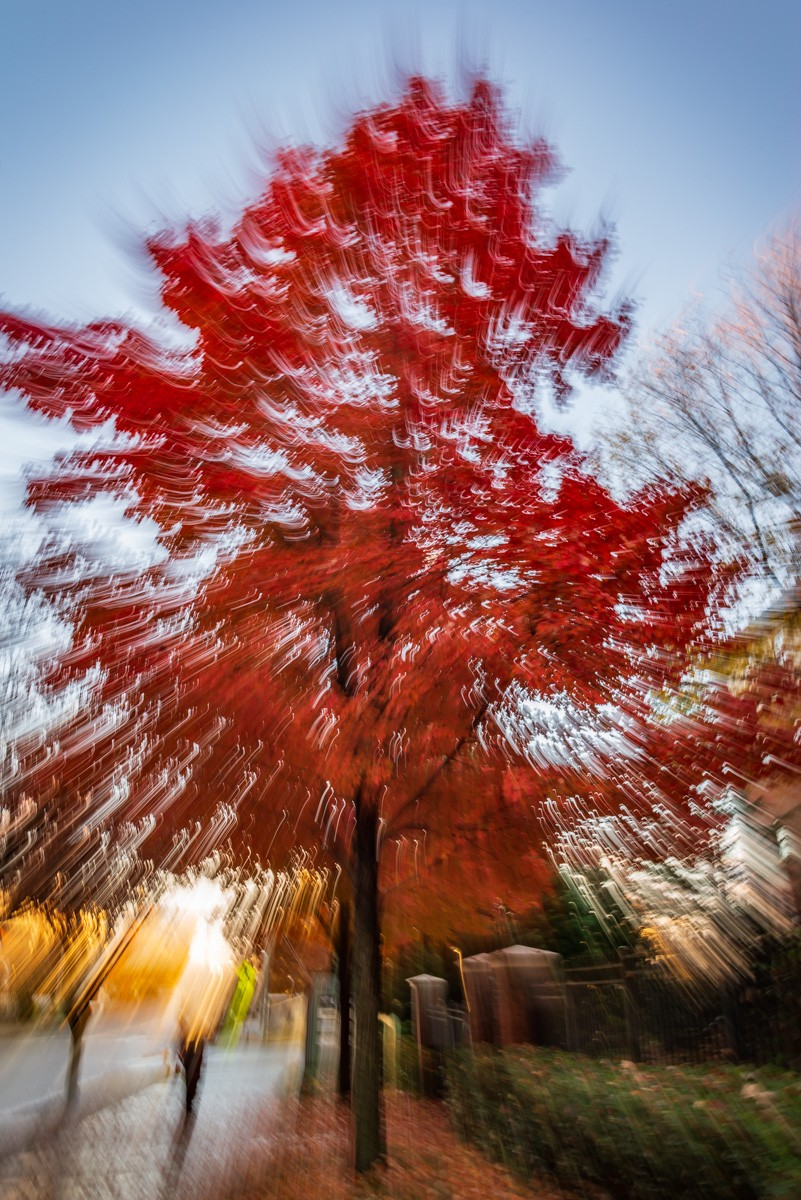 An abstract photo of a beautifully colored fall tree