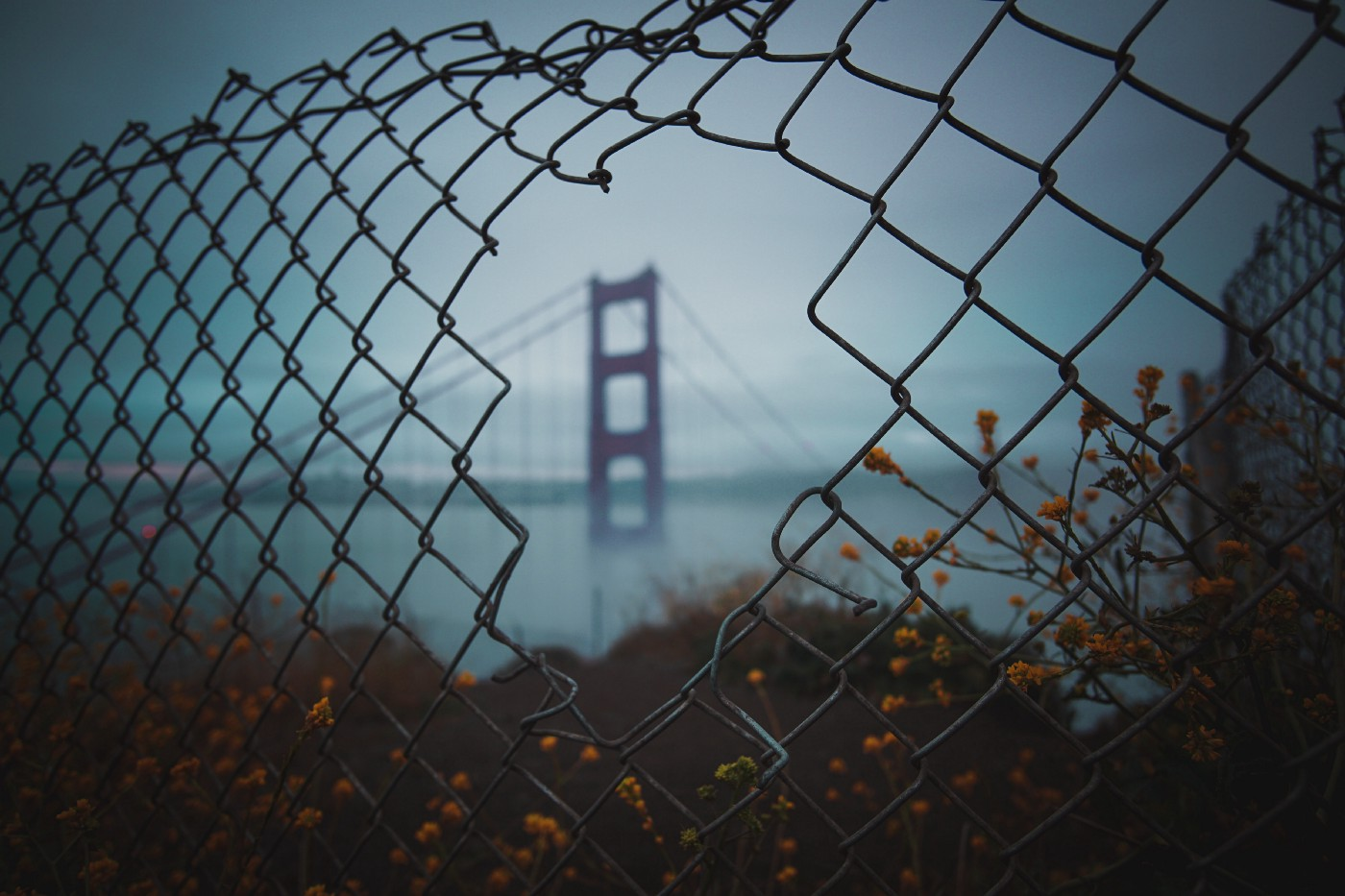 Peering through a chainlink fence, you see the foggy outlines of the golden gate bridge.