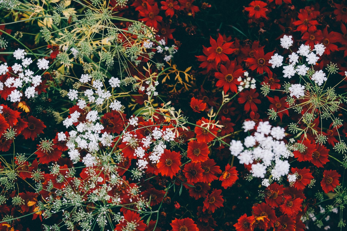 Red and white flowers on the ground — picture taken from above