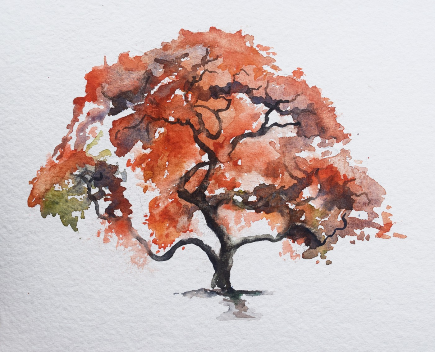 Japanese maple in watercolor