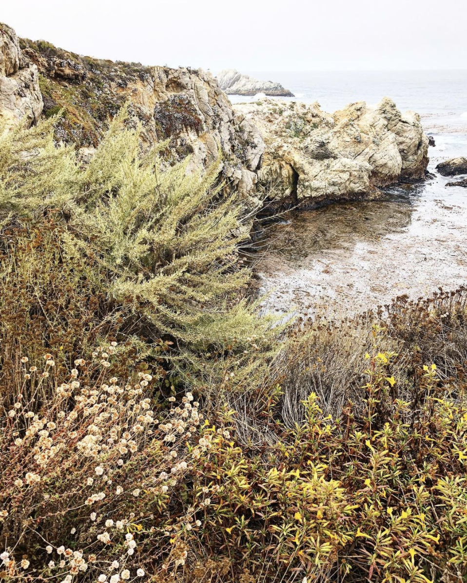 An image of the California coast, with jagged rocks leading into the ocean and wild green plants and pink and yellow flowers at the edge.